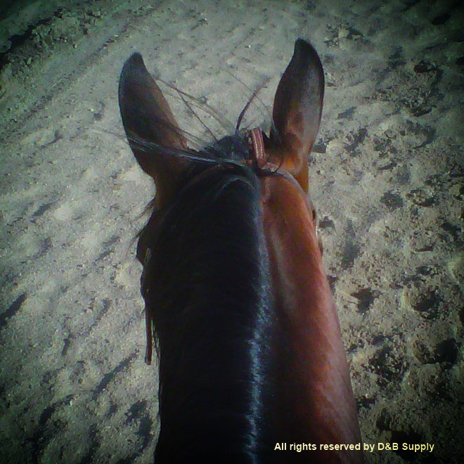 Laura Kiracofe's view on her horse