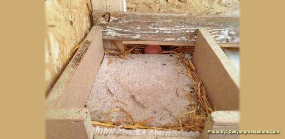 03212013c_Carpeted-chicken-coop