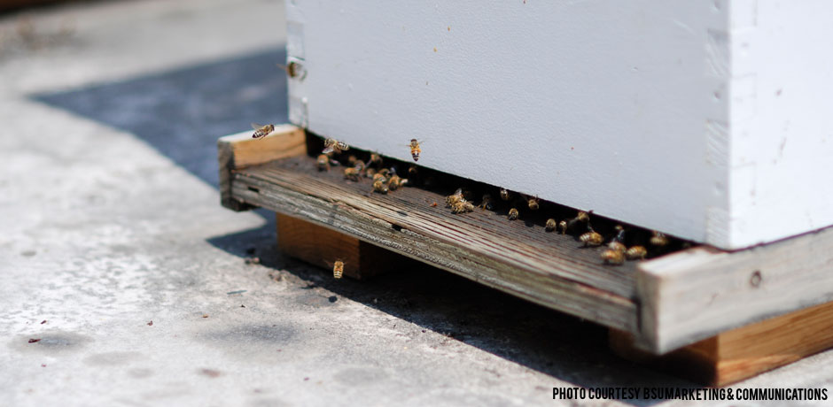 012815_RoofTopBees1