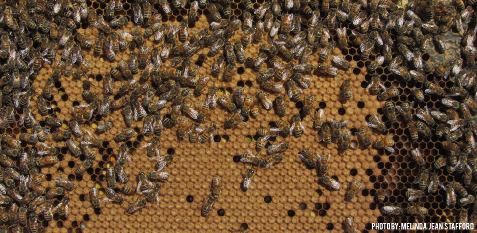 Healthy Frame of Bees | D&B Supply Blogs