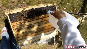 blog image for Expectations for New Beekeepers...