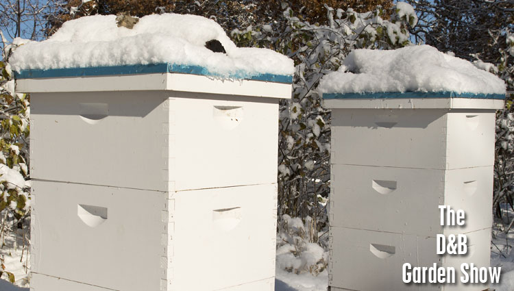 02062016_beehives-in-the-winter-with-snow-featured