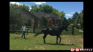 blog image for A Speed-Challenged Horse Part 1...