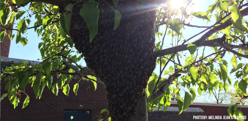 05272016_03-swarm-in-a-tree