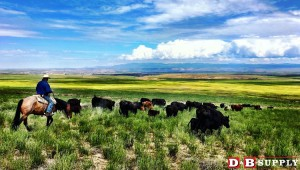 blog image for How to Run a Ranch in the Spring...