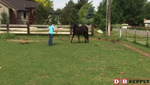 blog image for A Speed-Challenged Horse Part 2...