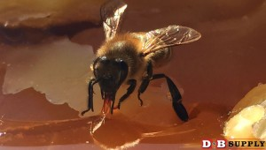 blog image for What is Honey?...