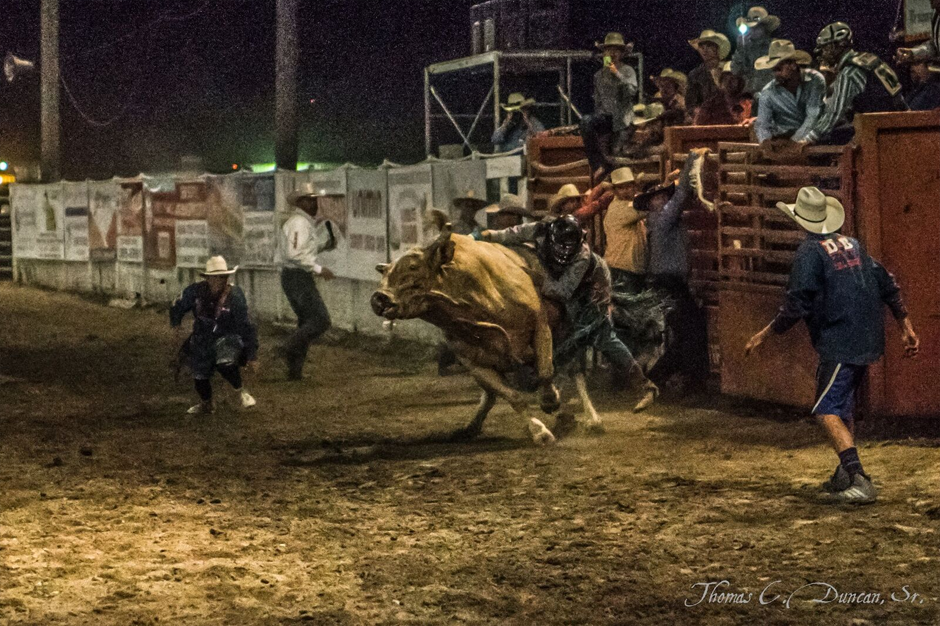 08262016_Boise-Gem-Co-Rodeo-bull-rider-2