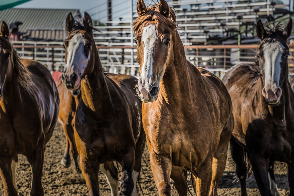 09022016_horses-in-an-arena