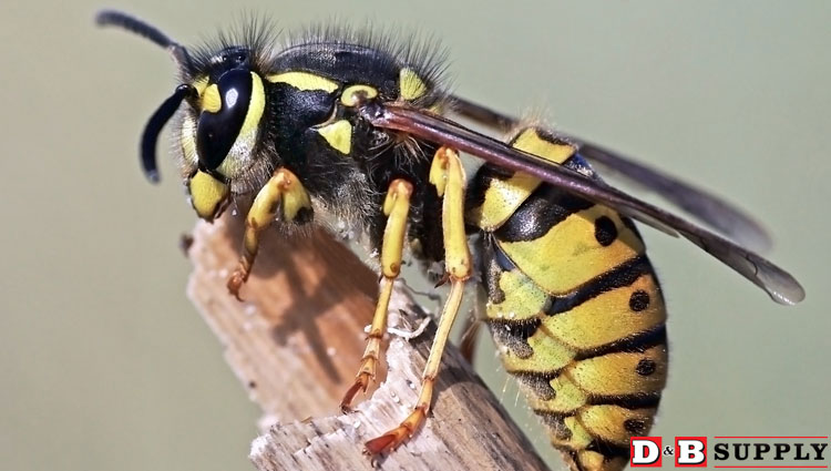 09132016_wasp-featured