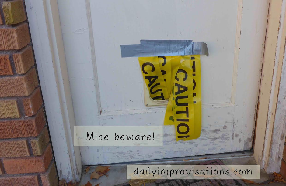 12152016_caution-tape-over-cat-door