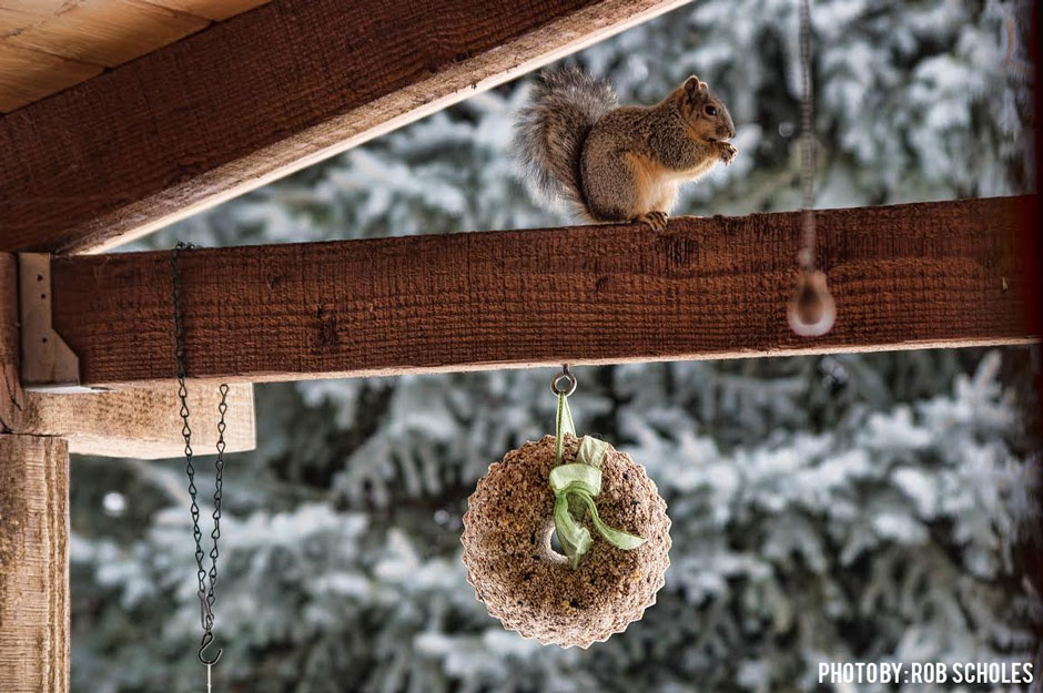 01122017_rob-scholes-birdseed-wreath-and-critter