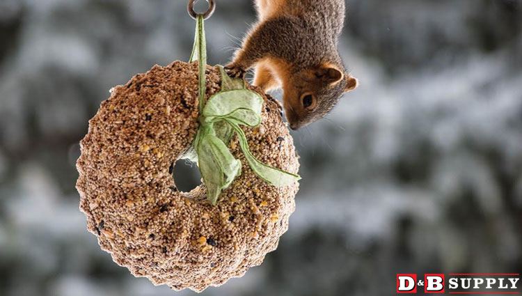 01122017_rob-scholes-birdseed-wreath-featured