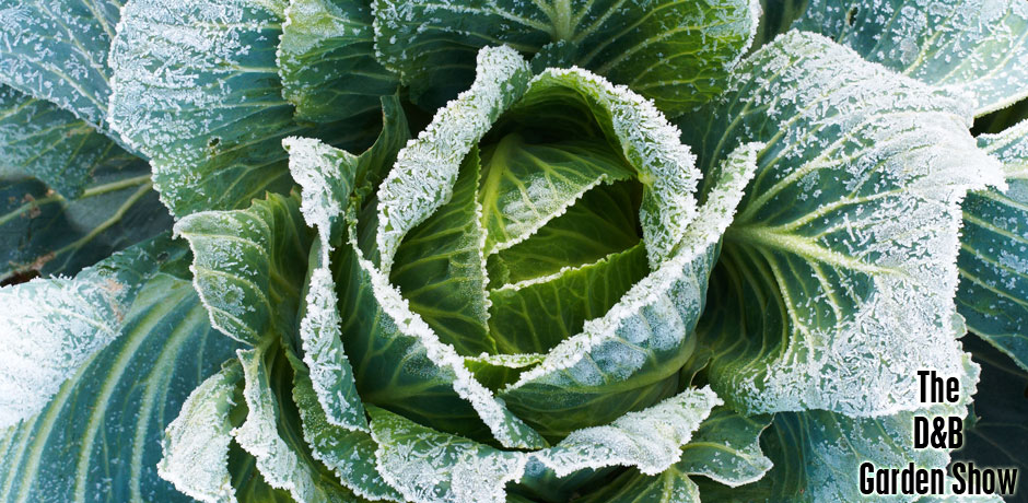 02022017_February-review cold cabbage