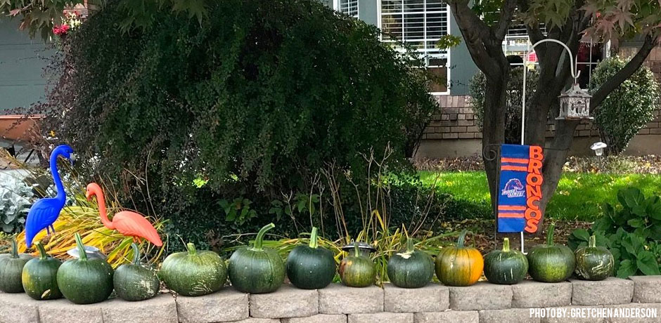 11012017_pumpkin-composting-decorative-BSU-pumpkins-on-a-wall