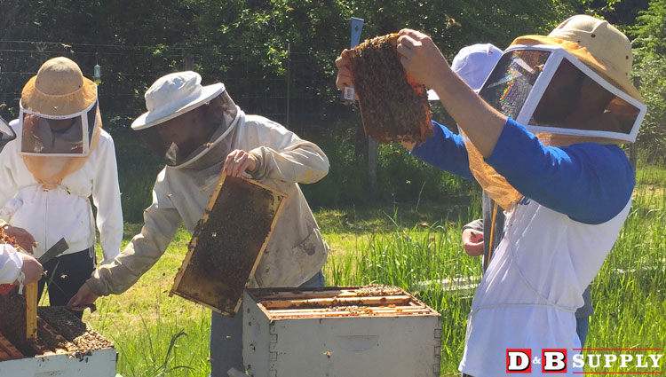 11282017_beekeeping-what-are-your-questions-featured