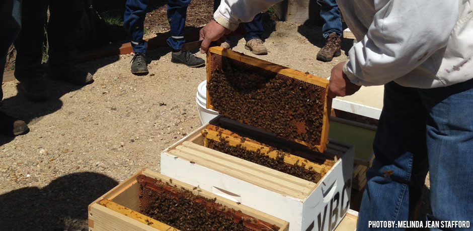 01192018_Is-Beekeeping-Easy_beekeeping-mentors