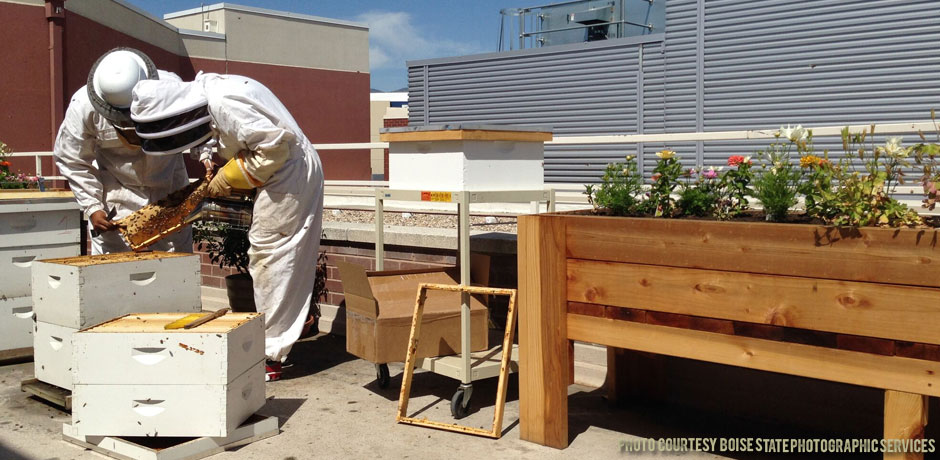 03222018_Beekeepers-checking-hives-in-the-spring-on-the-BSU-roof-2