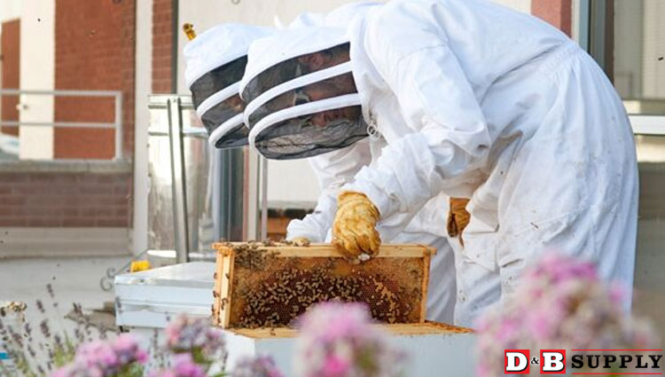03222018_Beekeepers-checking-hives-in-the-spring-on-the-BSU-roof-featured