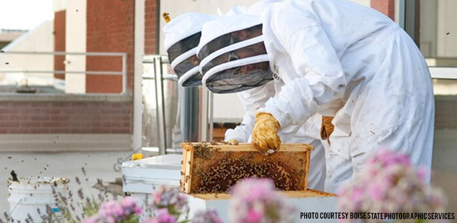 03222018_Beekeepers-checking-hives-in-the-spring-on-the-BSU-roof