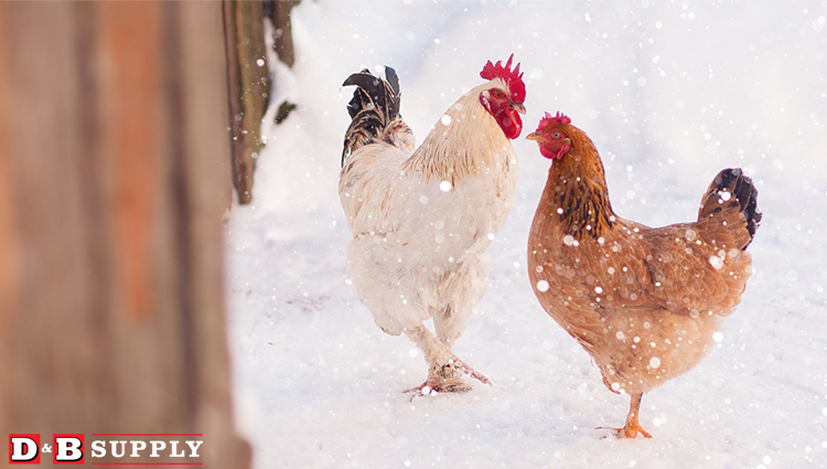 How to keep small animals warm blog picture of chickens in the snow