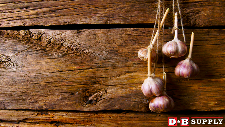 Storing Your Cured Garlic - Garlic Hanging on a Wood Wall Featured