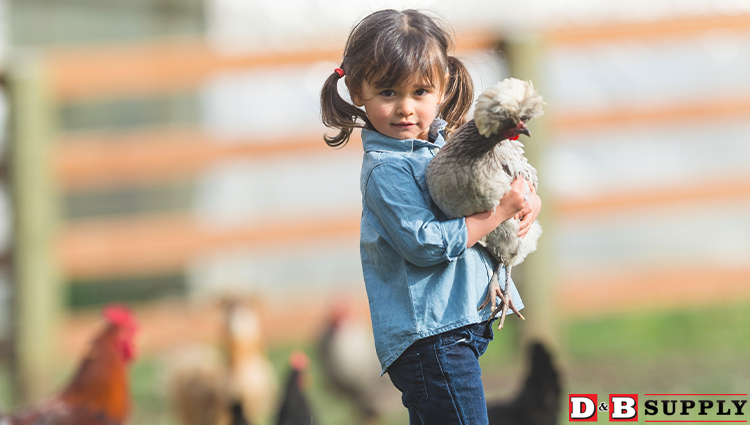 Time to Switch Chick Feed - Child Holding Chicken Featured